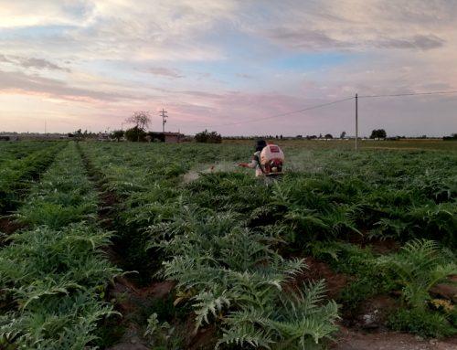 Desarrollo de Agro Empresas familiares: Agrícola Zapalka